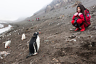 Female Chinese tourist observing gentoo penguins, Pygoscelis papua, Antarctica