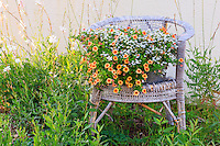 Wicker chair and garden in Manteo, NC.