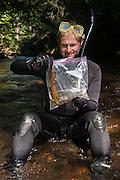 Researcher Stephen Spear looking &amp; Eastern Hellbender (Cryptobranchus alleganiensis <br /> Cooper's Creek,  Chattahoochee National Forest<br /> Georgia<br /> USA
