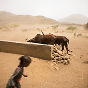 The trough, Egre Albe, Tigray, Ethiopia