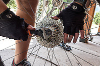 Bike mechanic fixing rear wheel