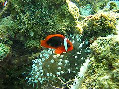 Underwater Kimberley Images