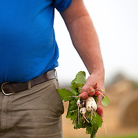 Bill VanScoy holds radish and a few small turnips.