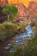 Bright Angel Creek and the Black Bridge near Phantom Ranch at the bottom Grand Canyon National Park.