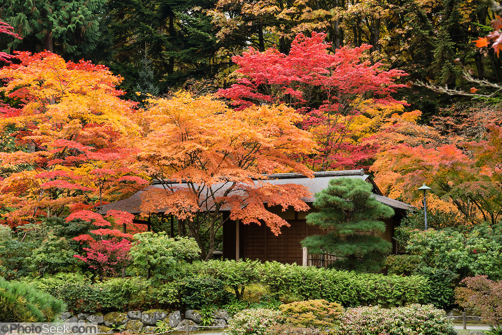 Fall foliage colors seattle japanese garden washington for Japanese garden colors