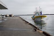 Early morning and the first of 5 fishing boats arrives at the fish market landing area to unload it's catch of large whelks and octopus, in the Matsukawaura district of Soma, Japan, on Monday 23 July 2012.