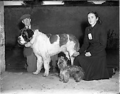 1952 - Mount Merrion Dog Show