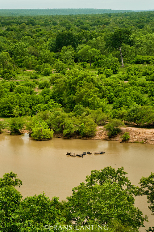 Elephants in water hole, Loxodonta africana, Mole National Park, Ghana