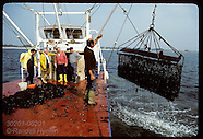 02: OYSTERS DREDGING NATIVES