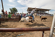 Crow Fair Rodeo, Crow Indian Reservation, Montana, Tie Down Roper