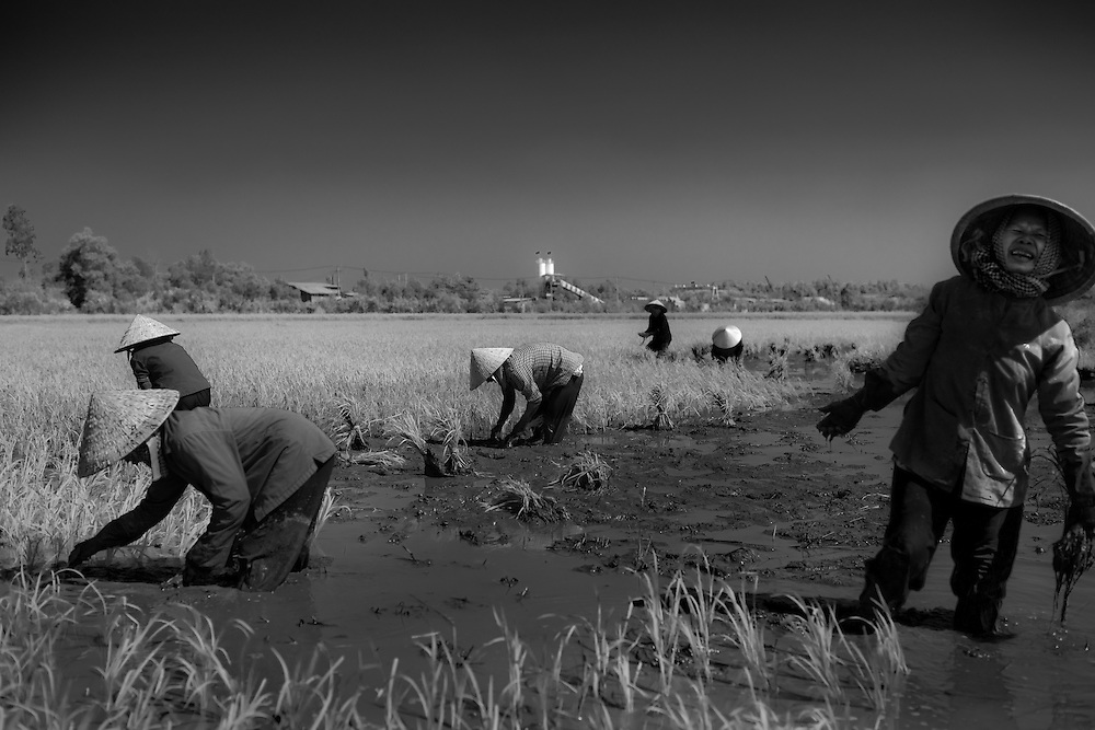 A group of women toil in a rice field outside Ho Chi Minh City, Vietnam.