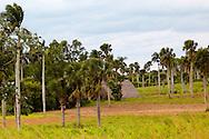 Barn and palms in the Macurije area, Pinar del Rio, Cuba.