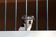 A dog waits for his owners to return in a building along a canal in Amsterdam