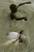 Africa, Sahel region, Chad, Islands of Lake Chad. Buduma boy carrying fish caught in nylon net in Lake Chad.