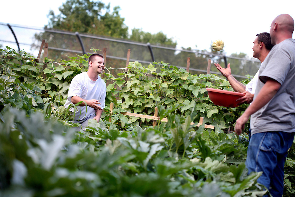 Nick Citrowske, left, tosses a freshly-harvested squash to fellow inmates Nick Kennedy, second from right, and Justin Swanson as they tend the garden at the Minnesota Correctional Facility in Red Wing August 20, 2012.  (Courtney Perry/Special to the Star Tribune)