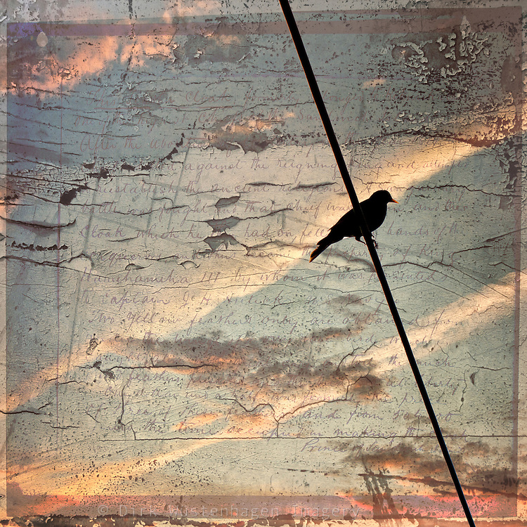 Silhouette of a magpie on a wire against a painterly textured sky