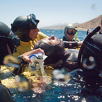"Officials assist a free diver after diving in the Blue Hole during a Free Dive competition outside of Dahab, Egypt. The Blue Hole is notorious for the number of diving fatalities which have occurred there, earning it the sobriquet ""World's Most Dangerous Dive Site"" and the nickname ""Diver's Cemetery"". The site is signposted by a sign that says ""Blue hole: Easy entry"". Accidents are frequently caused when divers attempt to find the tunnel through the reef (known as ""The Arch"") connecting the Blue Hole and open water at about 52 m depth. According to dive experts roughly 10 people die each year. April 2012."