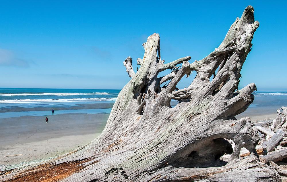 Driftwood on the beach west of Olympic National Park, La Push, Washington.