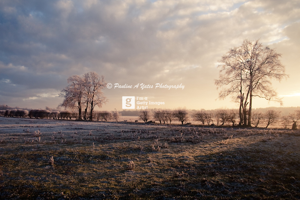 A heavy frost on the Suffolk Landscape, struck by the sunset.<br />