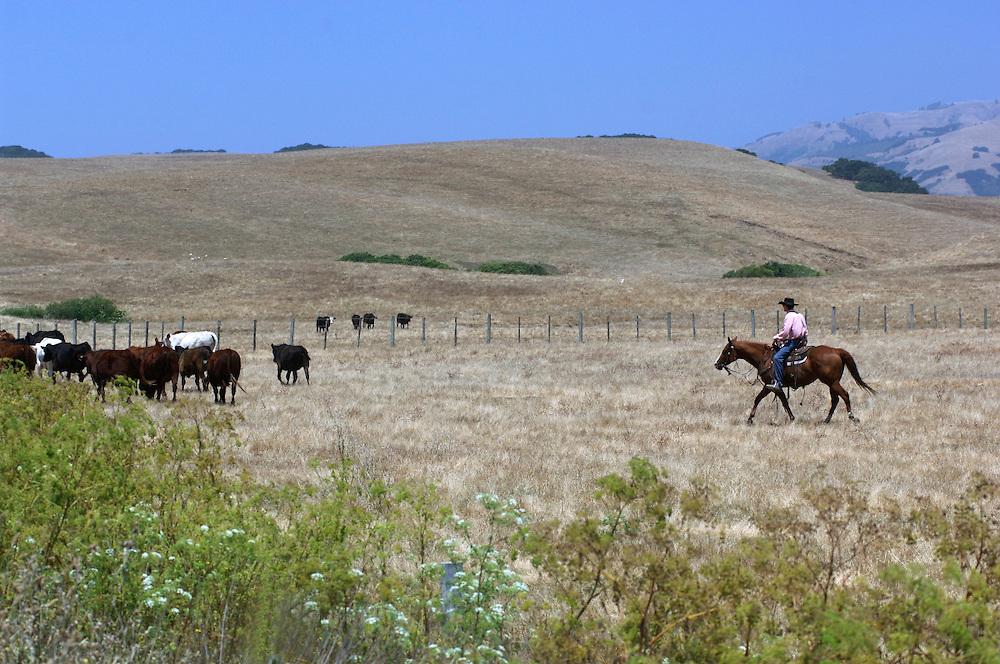 Cowboy along Highway 1, Cabrillo Highway, San Simeon, California, United States of America