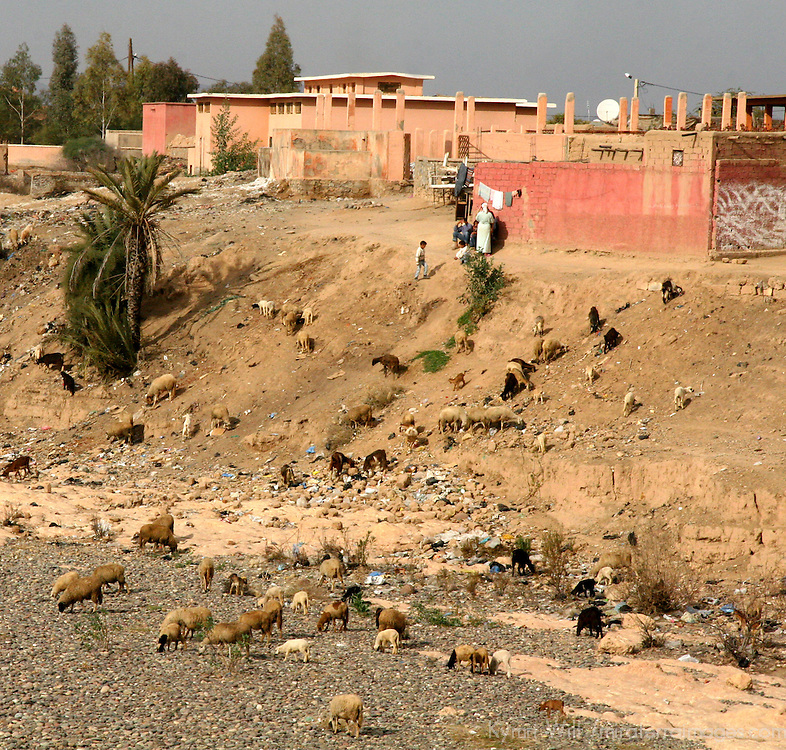 North Africa, Africa, Morocco.  Locals tend sheep and goats on the outskirts of a small town.