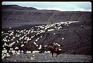 09: GENERAL SHEEP ROUNDUP