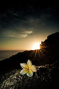 The sun sets behind a frangipani near Uluwatu Temple, Bali, Indonesia.