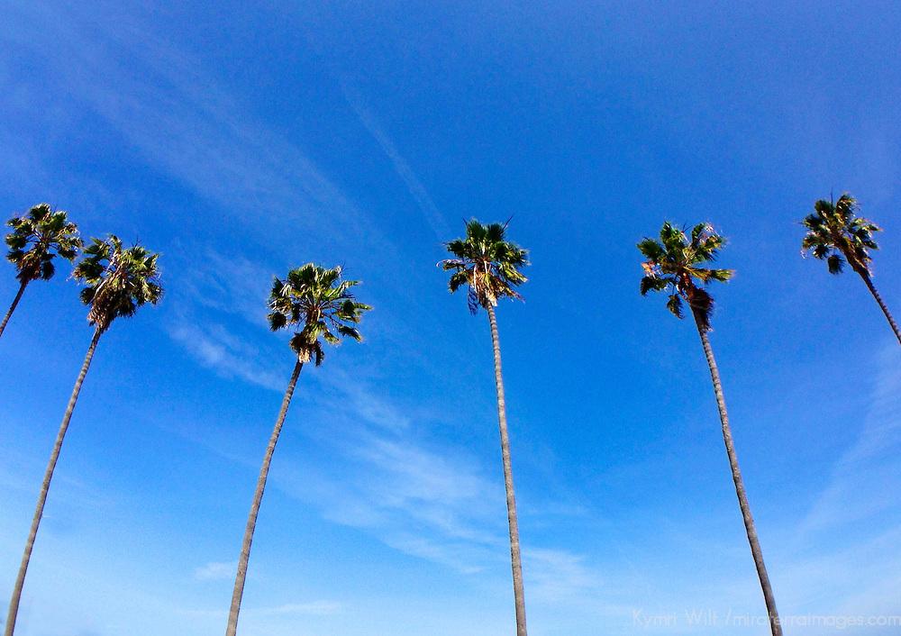 USA, California, San Diego. Palm Trees line La Jolla Shores Beach.