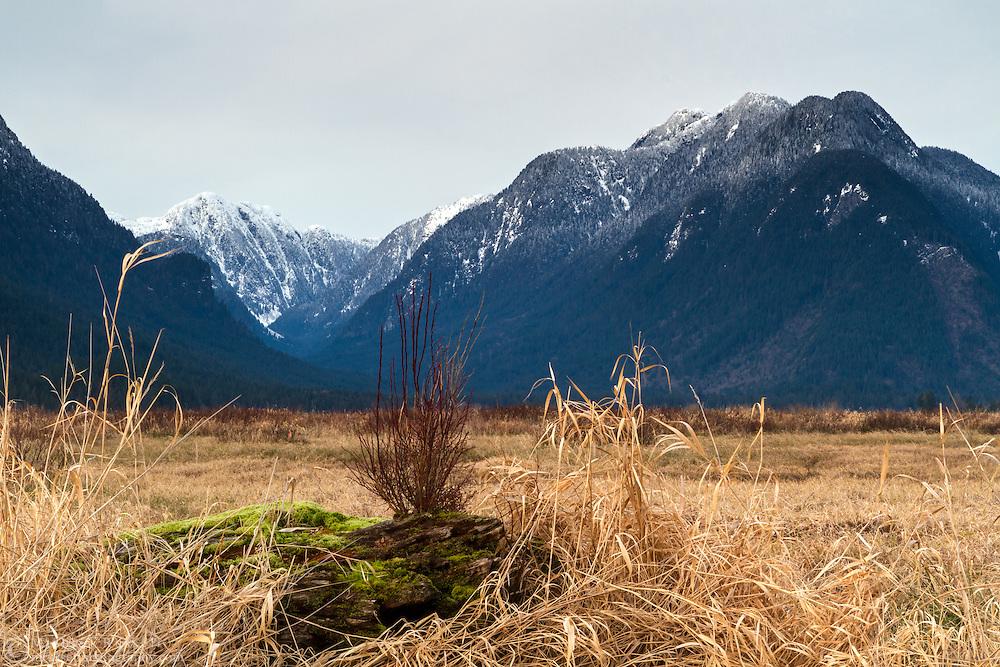Widgeon Peak and the Coast Mountains in Pitt Meadows, British Columbia, Canada