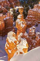 Warm glowing light on Thor's Hammer in Bryce Canyon National Park, Utah winter