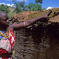 Africa, Kenya. Young Maasai wife spreads dung for roof of home