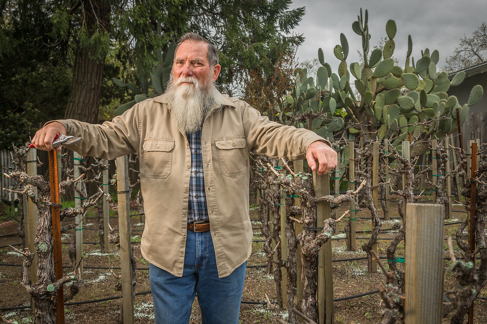 """""""We bought this house in 1998 and our first vintage was in 2001...we grow cabernet and merlot grape and put up 90 bottles a year.  Our kids come in the spring to help bottle and in the fall to harvest.""""  -Richard Uschyk in his front yard vineyard in Calistoga."""