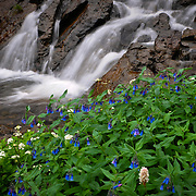 Wildflowers and creekfall