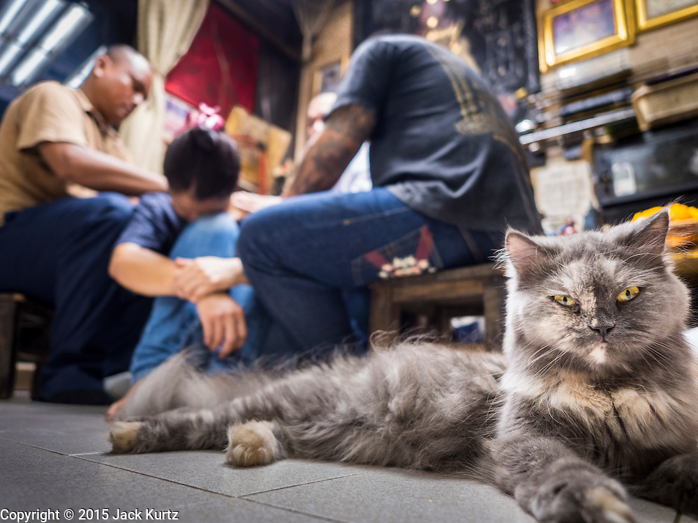 """25 MAY 2015 - BANGKOK, THAILAND:  A housecat sits on the floor while Ajarn Neng Onnut tattoos people in his Sak Yant tattoo parlor. Sak Yant (Thai for """"tattoos of mystical drawings"""" sak=tattoo, yantra=mystical drawing) tattoos are popular throughout Thailand, Cambodia, Laos and Myanmar. The tattoos are believed to impart magical powers to the people who have them. People get the tattoos to address specific needs. For example, a business person would get a tattoo to make his business successful, and a soldier would get a tattoo to help him in battle. The tattoos are blessed by monks or people who have magical powers. Ajarn Neng, a revered tattoo master in Bangkok, uses stainless steel needles to tattoo, other tattoo masters use bamboo needles. The tattoos are growing in popularity with tourists, but Thai religious leaders try to discourage tattoo masters from giving tourists tattoos for ornamental reasons.       PHOTO BY JACK KURTZ"""