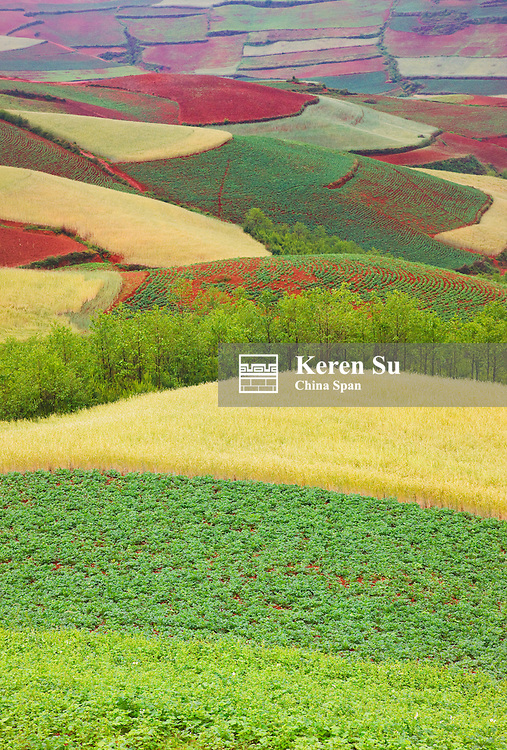 Red soil farmland of wheat in the mountain, Yunnan, China