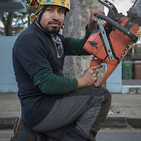Calistoga resident and Pacific Tree Care employee Drusley Vazquez cleans up after trimming trees in downtown Calistoga.