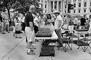 A look at the Dane County Farmers Market, June 8, 2013.