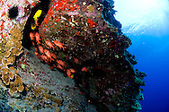 "The famous ""back wall"" dive at Molokini, Maui, Hawaii."