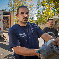 "Professional movers and Tlingit cousins, Justin Sapien and Blake Isbell, deliver our housewares from Alaska to our new home in Calistoga.  ""My grandmother was adopted and moved to california as a child.  Our's is one of the few Tlingit families in Sanoma County.""  mluvj8123@yahoo.com"