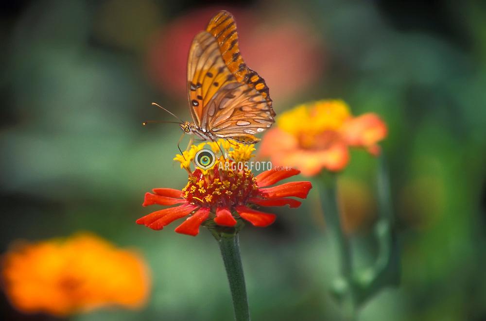 Borboleta sobre uma flor / Butterfly and flower