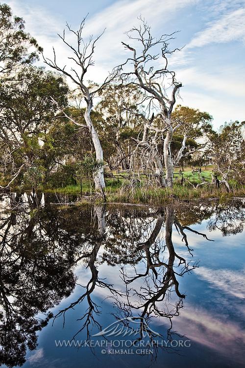 A billabong at Kangaroo Island, Australia