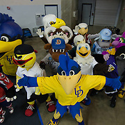 The University of Delaware Mascot UDEE prepare to lead the mascots onto the court for a halftime show featuring a game of basketball followed by a mascot dance show during half time of NCAA college basketball game Northeastern and #9 Delaware Sunday, Feb. 26, 2012 at the Bob Carpenter Center in Newark, Del.