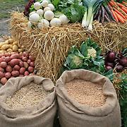 Agrisjå, landbruksmessa i Stjørdal. Forøksringen i Stjørdal og omegn viste fram mangfoldet av potet, grønnsaker og korn. Foto: Bente Haarstad
