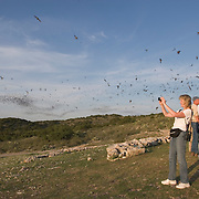 People watching Mexican free-tailed bats flying from the Frio Bat Cave, near Concan, Texas.