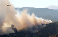 A hawk flies over the fire raging through the forest in the High Park fire west of Fort Collins, Colorado June 19, 2012.  Eight more homes were lost in a Colorado  wildfire that is the state's most destructive on record and which  continued to rage dangerously close to a residential subdivision as  winds stoked the flames, fire officials said on Monday. REUTERS/Rick Wilking  (UNITED STATES)