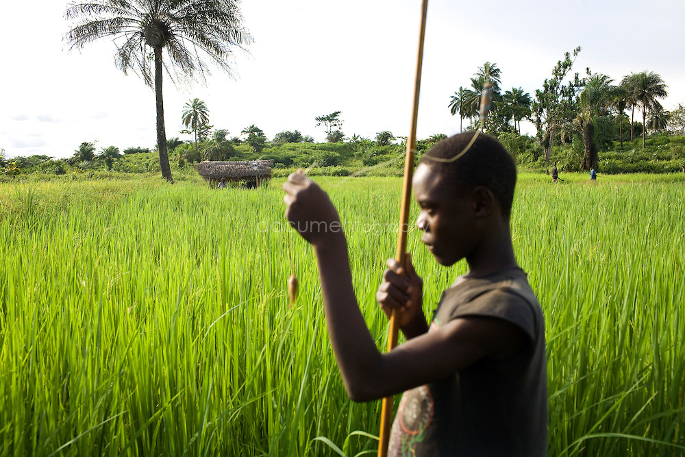 A child fishing in the rice fields, Kingsville #7, Liberia.