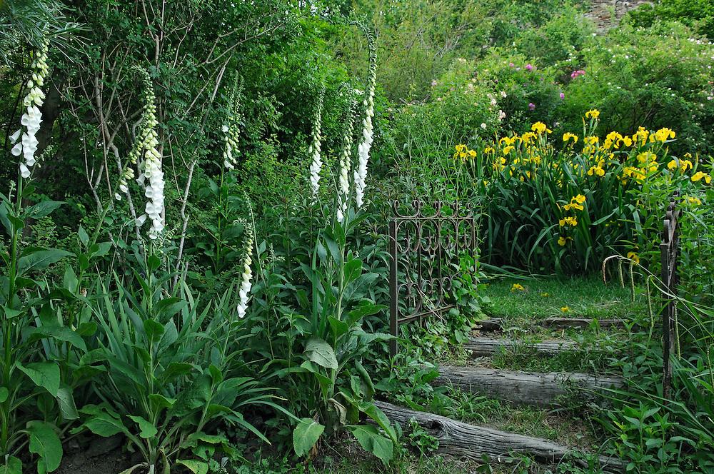 France, Languedoc Roussillon, Gard, Concoules, Jardin du Tomple, jardin remarquable