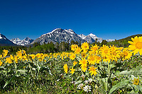 spring flowers glacier national park