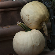 Halloween white pumpkins in Greenwich Village, New York City.<br />