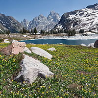 WY00620-00...WYOMING - Glacier lilys and Lake Solitude in Grand Teton National Park.